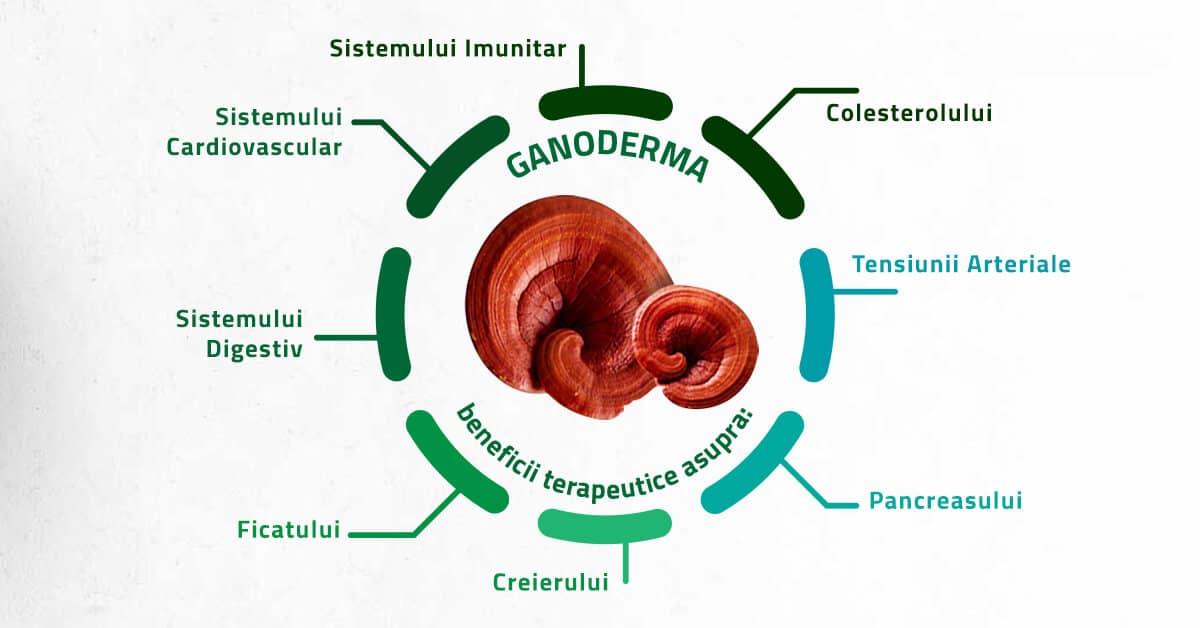 Beneficii Cafea cu Ganoderma